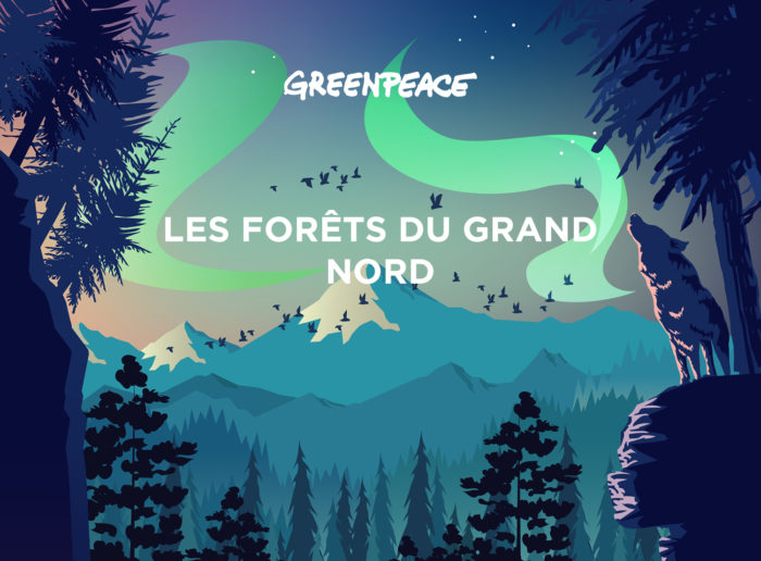 Illustrations vectoriel - Projet Greenpeace -Headline - Campione Orlando - Graphisme - Parallaxe - Site web - Alpaga Studio - couleurs